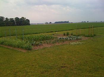 Garden2008a