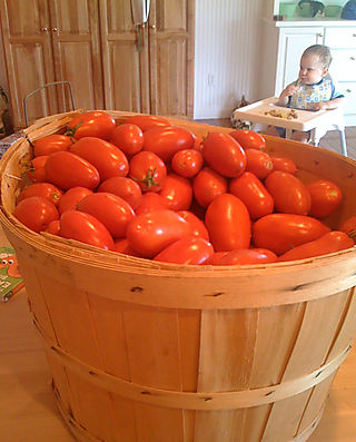 TomatoBushel