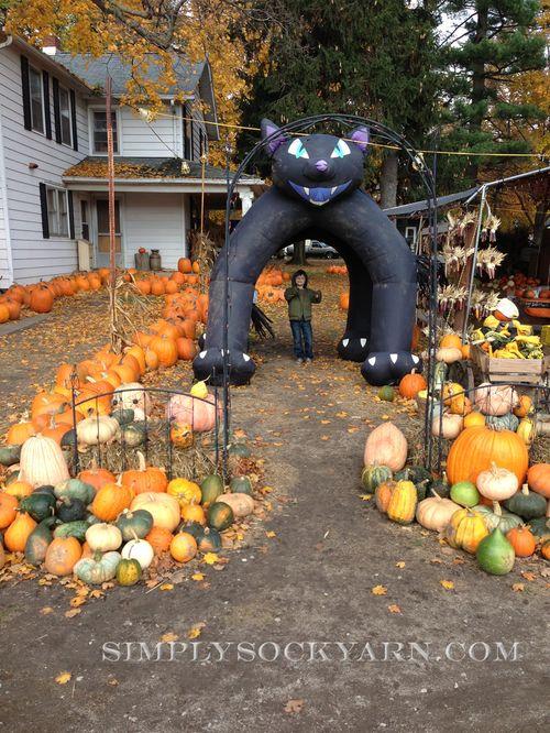 PumpkinPicking2012_3 1000px