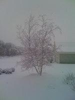 Snow1_2